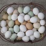 Eggs: Color Doesn't Matter