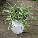 Houseplants: Fresh Air From a Pot!